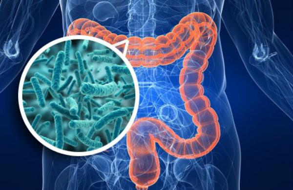 Salud intestinal: microbiota intestinal y su importancia - Nutricionista Vegetariana Karina Herrera