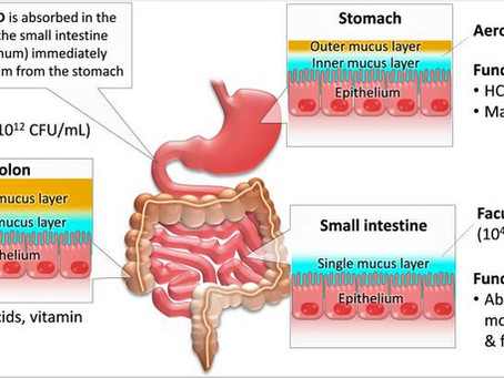 Vitamina D y su relación con la microbiota