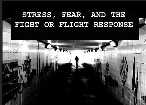 fight flight.png