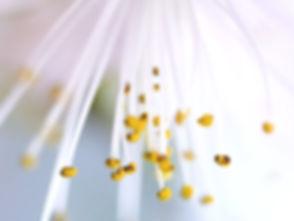 Bloom_edited.jpg
