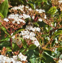 Bush School Polinators