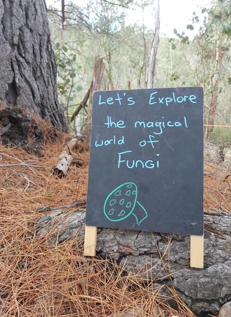Exploring Fungi