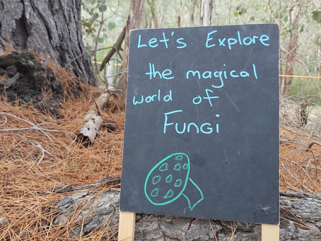 Lets explore the wonderful world of fungi, mapping and camp fires.