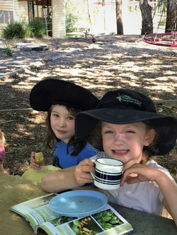 Making and enjoying lemon myrtle tea
