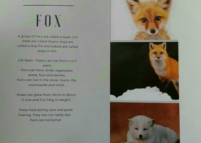 fox information report.jpg