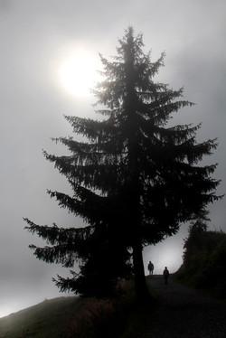 The Family Tree - Jenny She