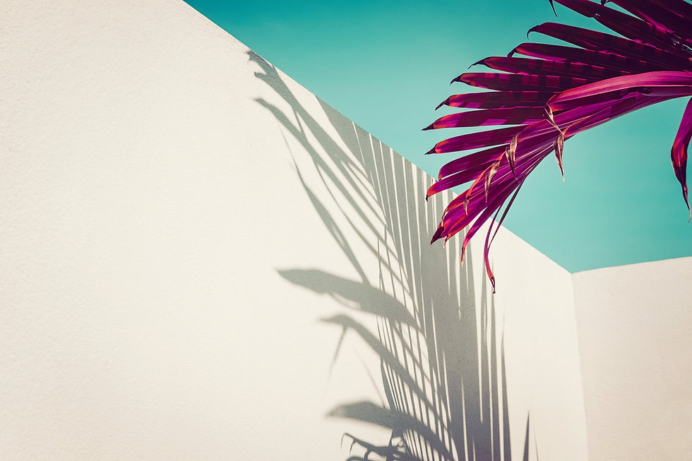 Purple palm leaves against turquoise sky and white wall. Vivid colors, creative colorful m