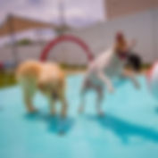 dog jumping and playing in dog splash pad