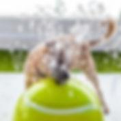 dog-splash-pad-h2o-fido-11-18.jpg