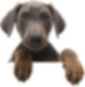 cute puppy with paws hanging over wall