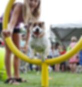 dog hoop