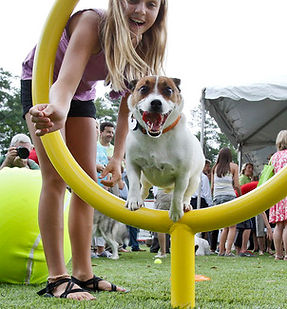 commercial dog hoop