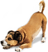 dog_PNG2416.png