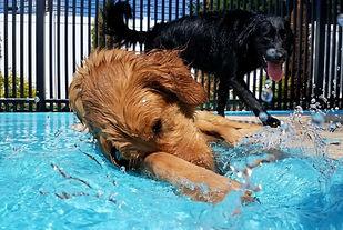 dog laying in a dog splash pad