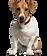 small pup posing