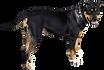 huge black dog standing