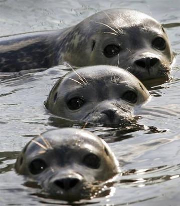 ...uratujesz foczkę lub odwiedzisz fokarium w okolicy :)