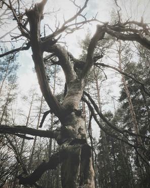 ...takie cuda w naszych lasach :)