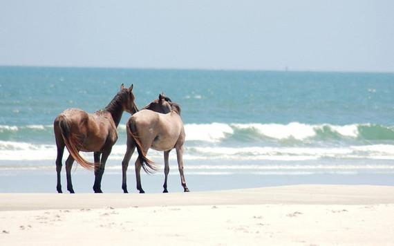 ...okoliczne stadniny koni spełnią Twoje marzenia :)
