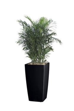 BambooPalm
