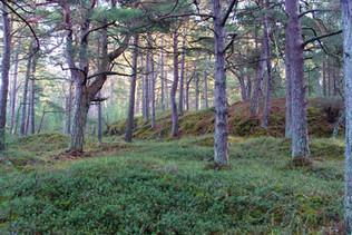 Cisowy Zakątek- nadmorski las