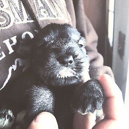 iphone puppy 382_edited.jpg