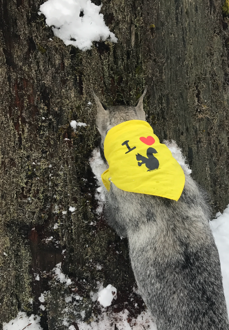Squirrel huntress at work...