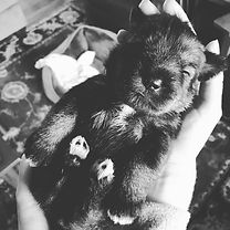 iphone puppy 397.JPG
