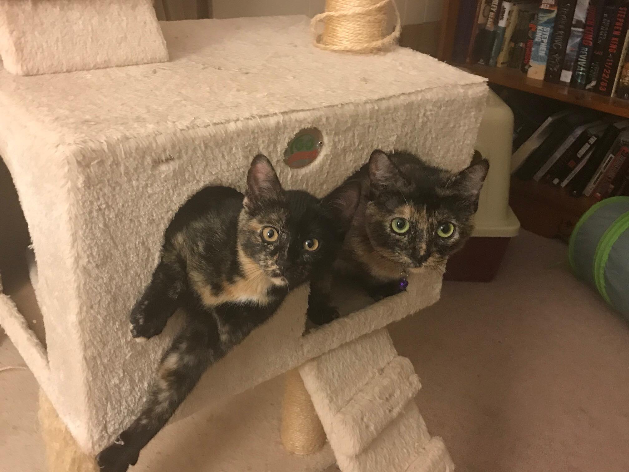 Annie & Cinder
