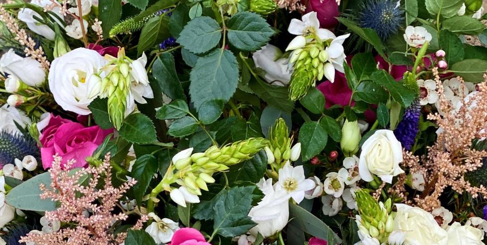 'Edith' flowers