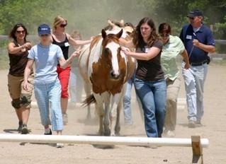 Komandas saliedēšanas treniņš īpaši apmācītu zirgu vadībā