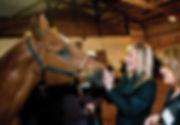 Vadības sapulce, komandas saliedēšana, vadības treniņš, vadības grupa, Komandas saliedēšanas treniņš īpaši apmācītu zirgu vadībā