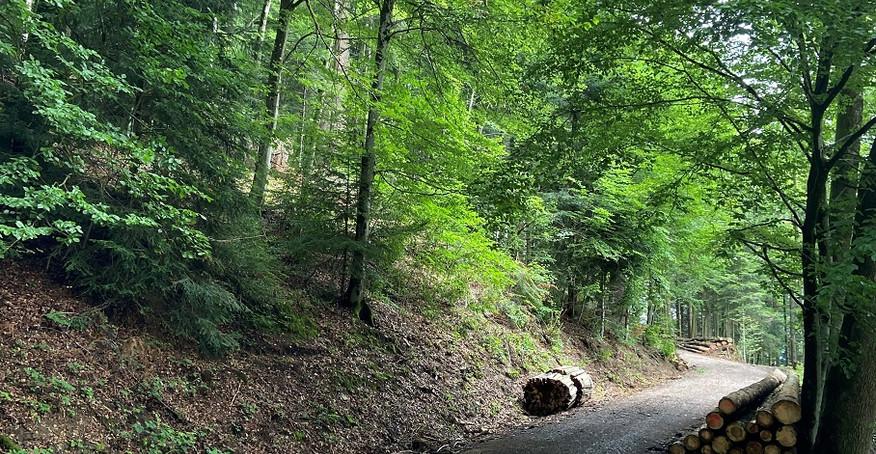 Weg Richtung Bergacker.jpg