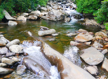 Great Smoky Mountains National Park reopened on May 9!