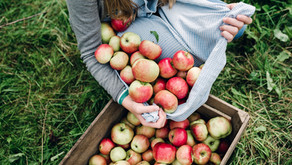 Here's where you can go apple picking this Fall