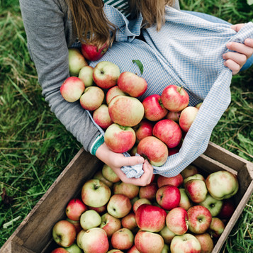 Apple Annies Orchard