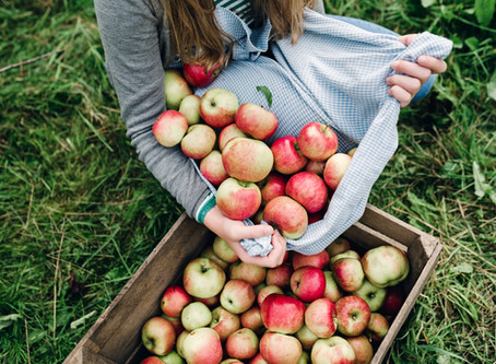 6 Ways to Use Your Fall Apple Bounty!