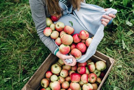 Bir sandık içinde elmalar