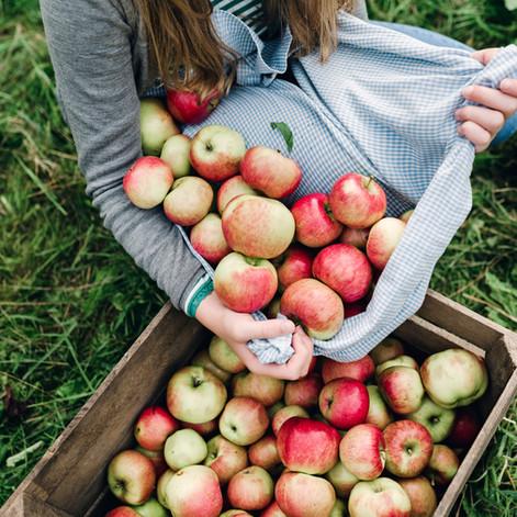 Appels in een krat