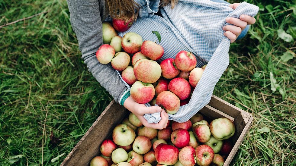 Apple- Breaburn (English)