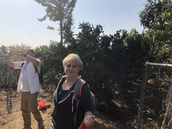 Fruit Picking 4