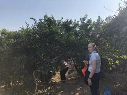 Fruit Picking 5