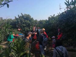 Fruit Picking 3