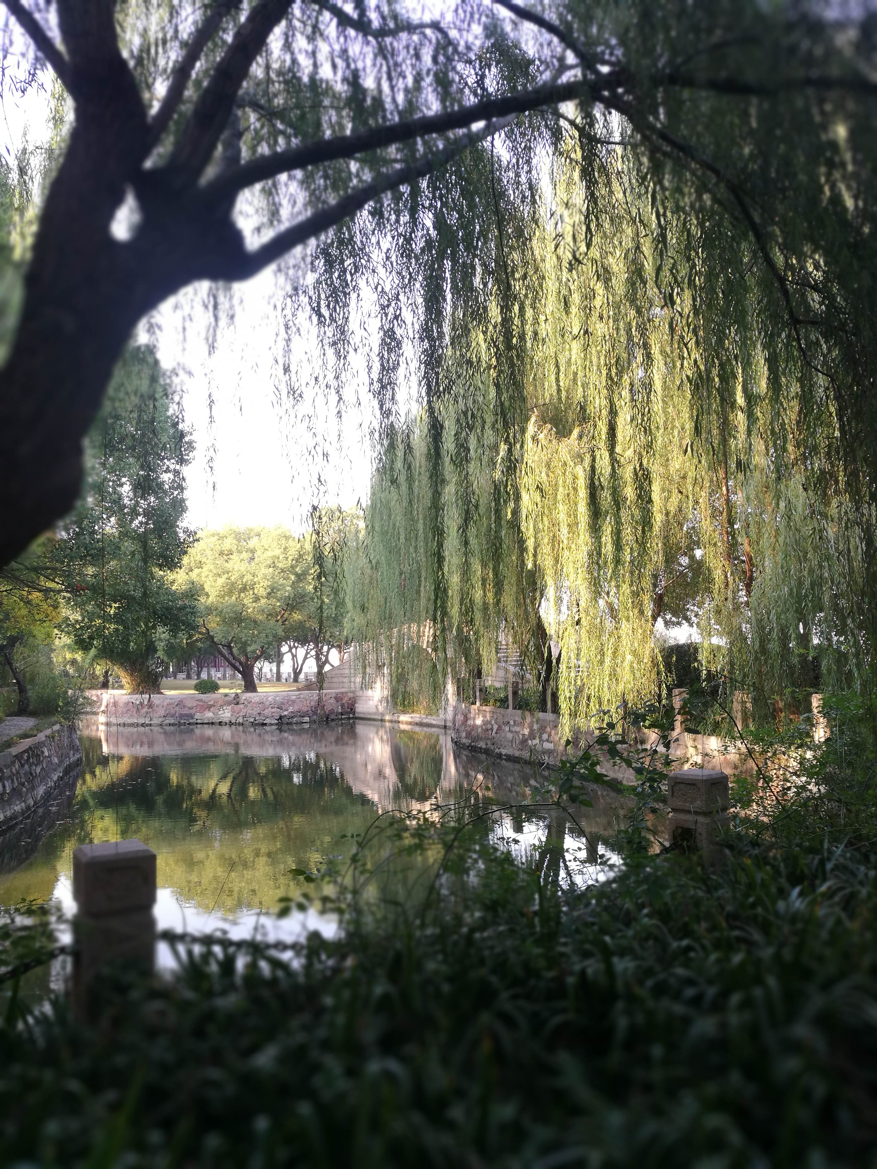 Qi Garden 6