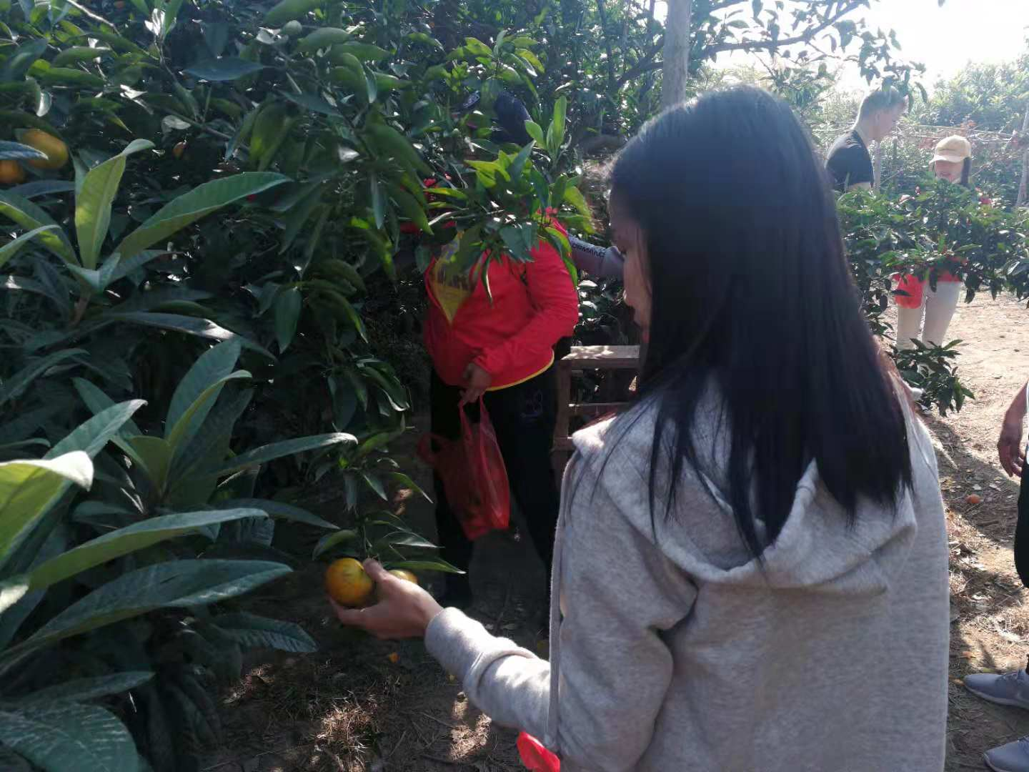 Fruit Picking 6