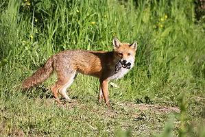 Fox NB pool.jpg