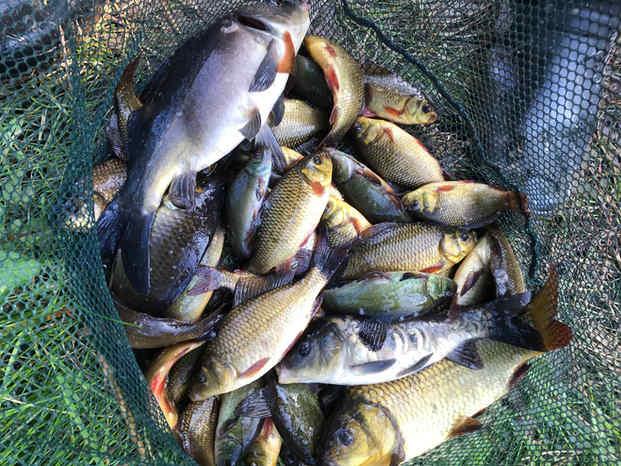 Net of fish