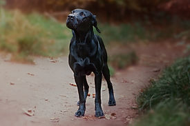 Marion Hill Photography--24.jpg