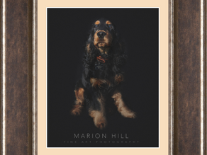 Pride of the pack...Fine Art Pet Photography