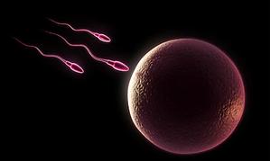 Fertility6.png